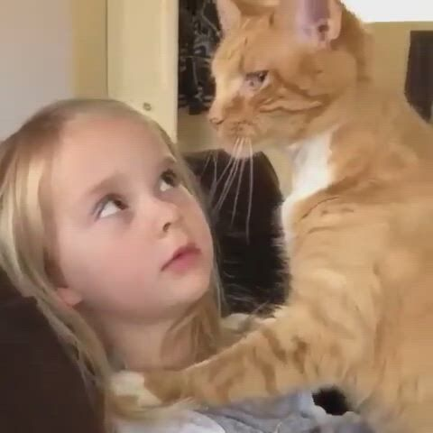 A cool cat with the cute girl