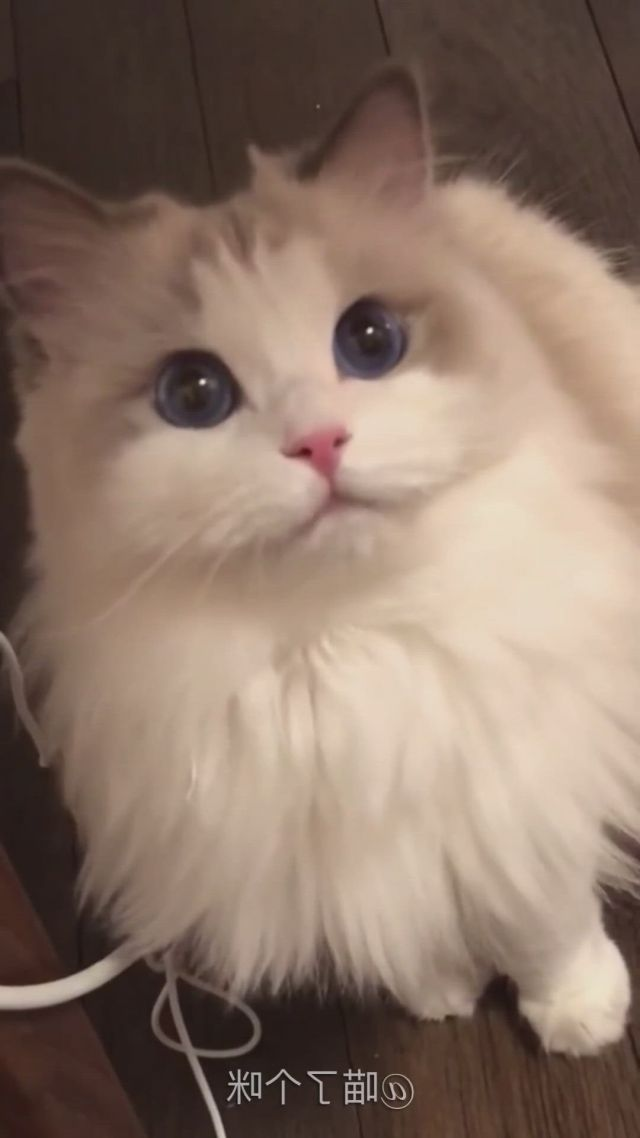 Cute cats collection 9
