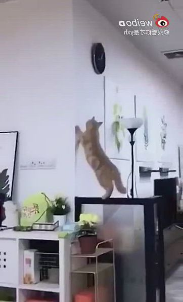 Hahaha, funny cats collection