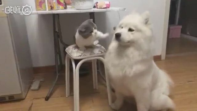 Hahaha. the dog want to a kiss but get a paw