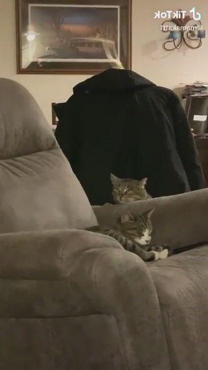 Hahaha. the naughty cat want to tease the sleeping cat