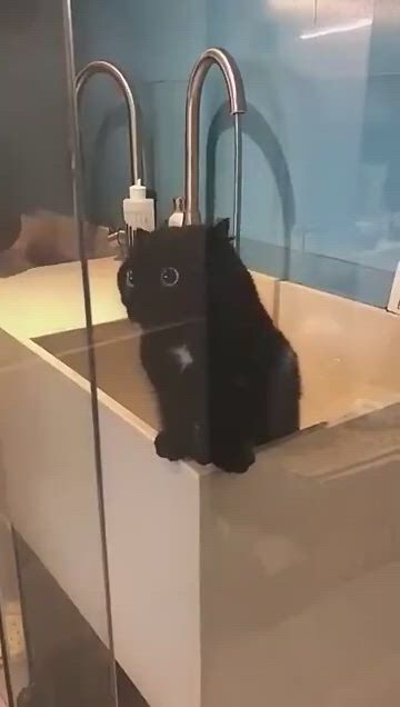 The cute black cat with bright eyes