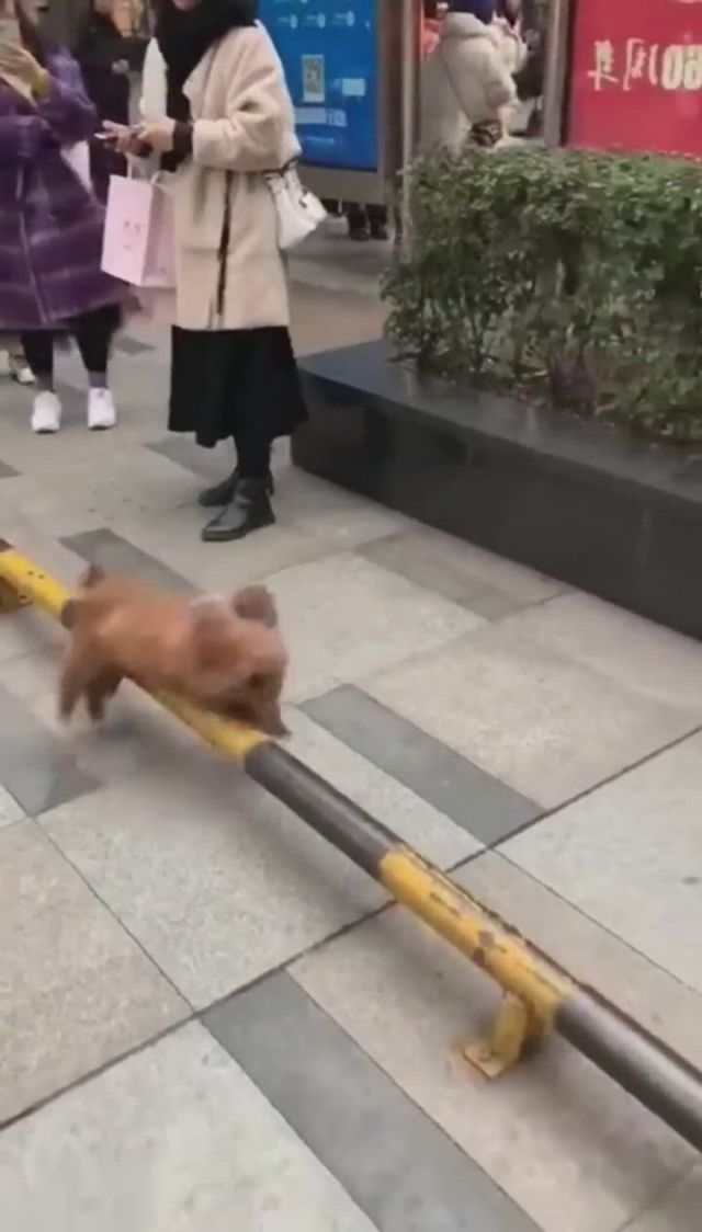 Woo. a dog like exercise - Video & GIFs | cute baby animals,cute little animals,funny animal videos,cute funny animals,funny dogs,funny cute,animal intelligence,animals and pets,zoo animals,cute posts,cute dogs and puppies