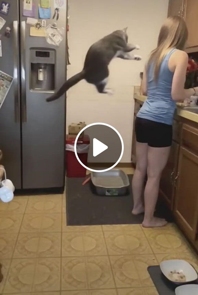 Wooo. A Jumper Cat - Video & GIFs | cute baby animals, cats, cute animals, funny animals, horse quotes, funny cute, cute babies, kittens, funny memes, pets
