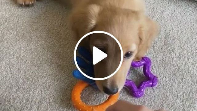 George The Awesome Dog - Video & GIFs | cute dogs, cute little animals, dogs and puppies