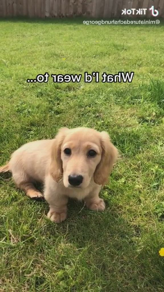 George the most beloved dog - Video & GIFs   super cute puppies,cute dogs and puppies,baby dogs,pet dogs,doggies,puppies tips,small puppies,puppies stuff,doggie beds