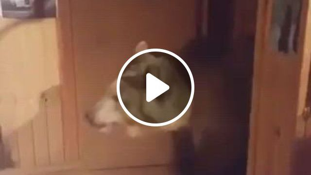 Whatcha Lookin At Human - Video & GIFs | funny animals, cute baby animals, animal gifs, cute funny animals, funny cute, animals and pets, wild animals, christopher robin, cute animal