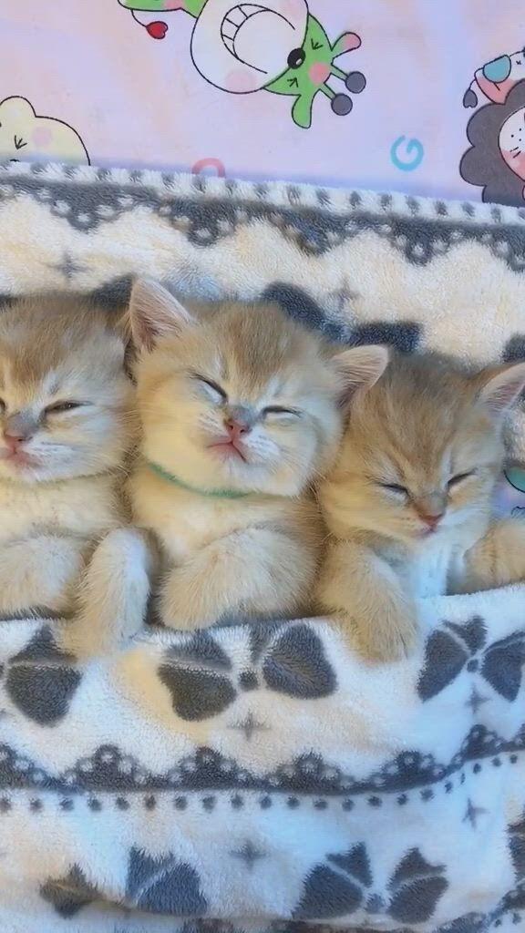 Do cats dream, too - Video & GIFs   baby animals super cute,cute baby animals,cute baby cats,cute babies,funny animal videos,funny animals,cute animals,lion tattoo,tattoo arm,medusa tattoo