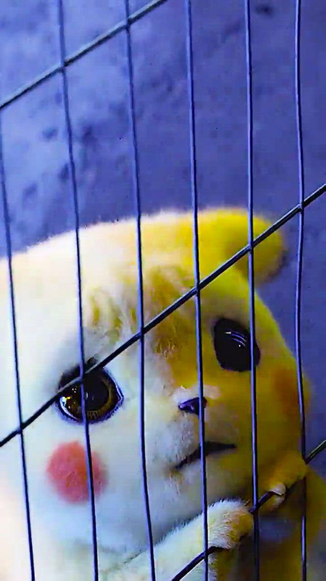 Pikachu - Video & GIFs   pikachu art,cute kawaii animals,cute pikachu,pikachu cat,pikachu pokeball,pikachu drawing,o pokemon,pikachu funny,pikachu makeup,pikachu tattoo,deadpool pikachu,pokemon videos