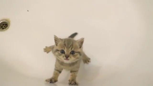 Cute kitten bath