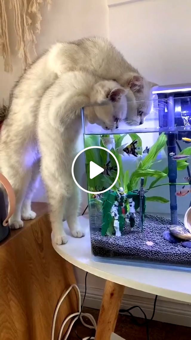 Getting a cat, pet, cat owners, christina k, litter boxes, k white, breed kitty, shelter, kitten, animal, cat lady, kittens cats, cute cats, memes, funny cat gif