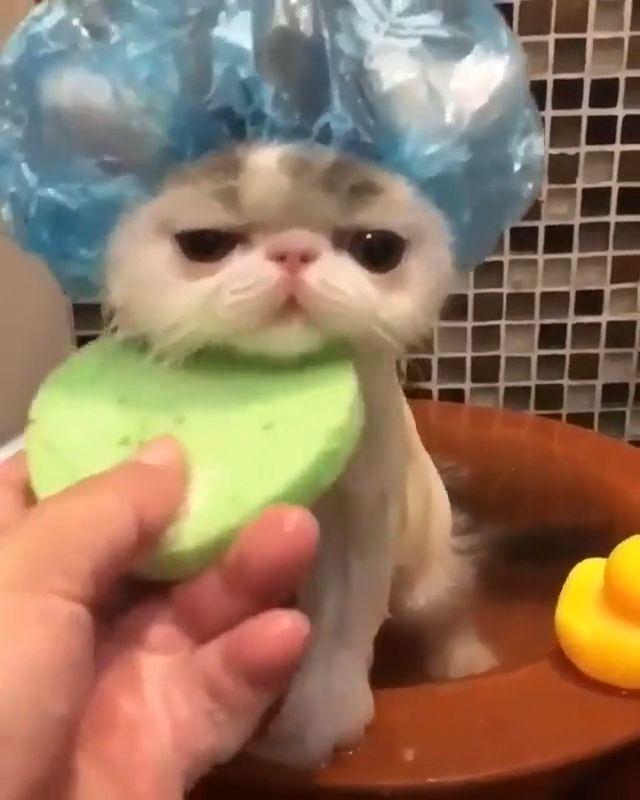 Baby cat bath
