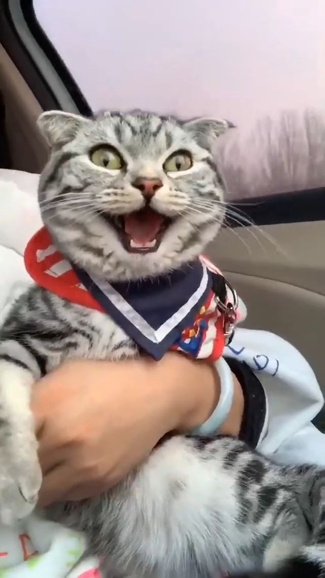 Cute Smiling Cat