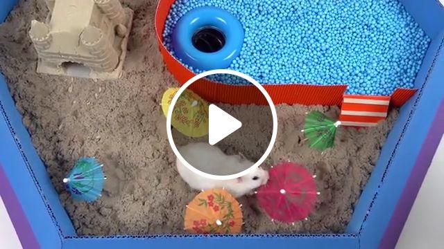 Pool Maze for Hamster Rainbow Pyramid Maze resize, pet hamster, dwarf hamster, homura ham, comedy science, obstacle course, magnetic balls super mario bros, slick slime, slime sam, secret life, hamster cage, months ago, diy, syrian hamster