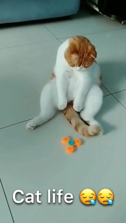 Cat Play the Right Way