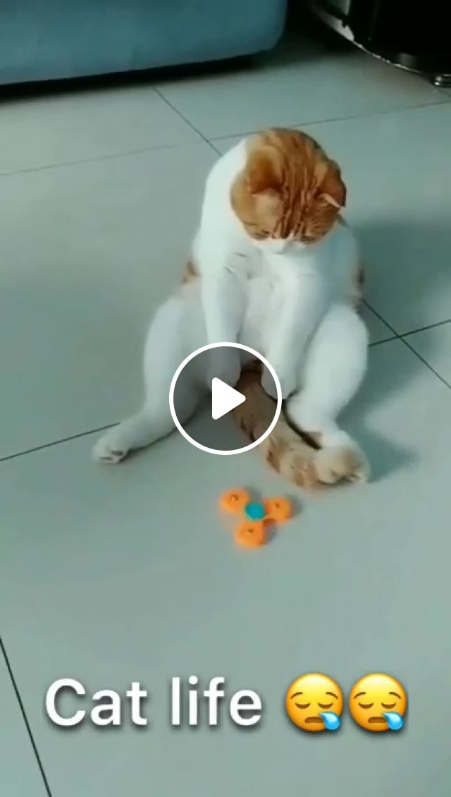 Cat Play the Right Way, toy, cat toys, cat memes, cat supplies, cat, vills, bengal cat, cat kitten, jackson galaxy, kitty cats, cat tail, crazy cats, pet, funny cats, cat lady, cute cats, siamese cats