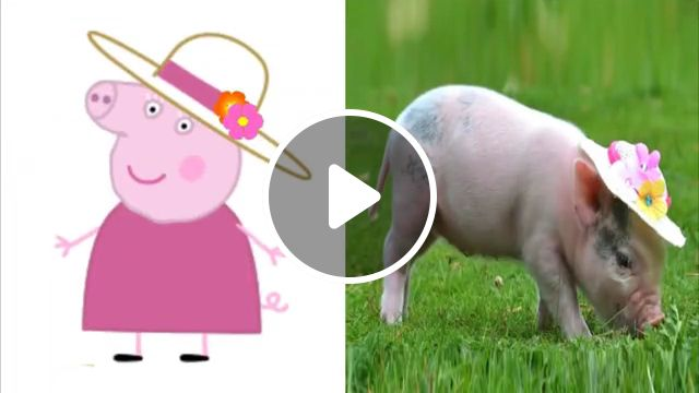 Cute Baby Pig - Video & GIFs | piglet, wallpaper, mine, craft, little, alive, cartoon, mini, pigi, phone, adorable baby, art, puppy, drawings, newborn baby, outline, chubby, farm, eating, flying, food, peppa pig