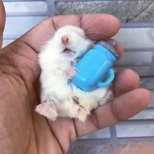 Keeping Hamster as Pet