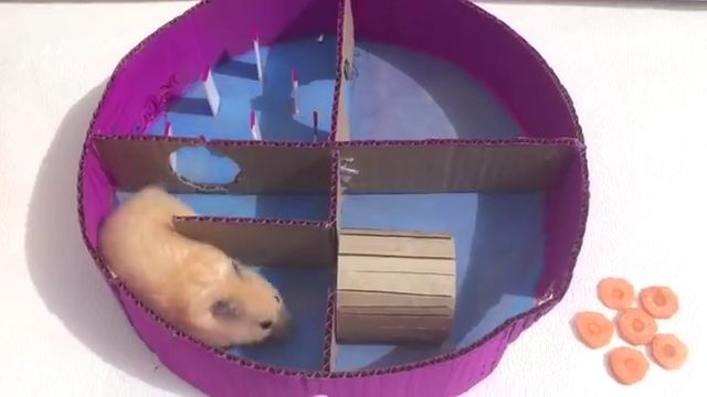 Hamster in 6 Level Round Maze