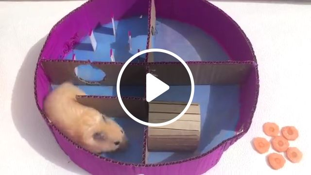 Hamster in 6 Level Round Maze, obstacle course, pet, hamster, cute, funny hamster, cute hamster, animal, syrian hamster, views, pringles, secret life