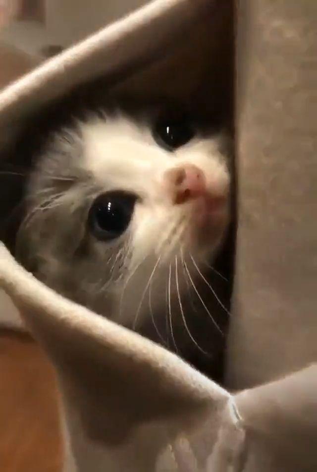 Baby cute kitten
