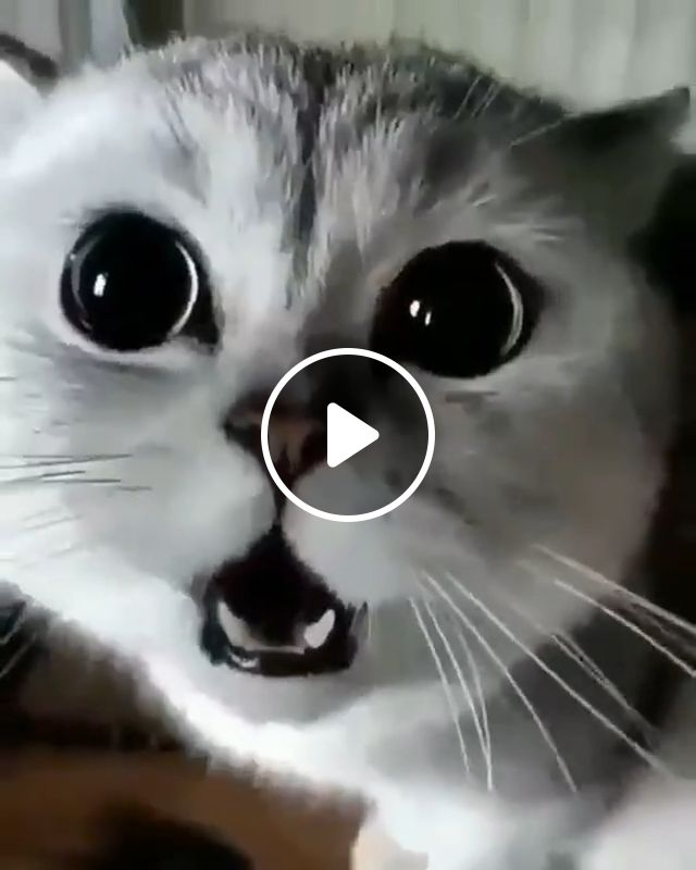 Cute baby cat, cute cat, awesome, cats, cat, kitty, kitten, pussy cat, amazing, cat eyes, gif