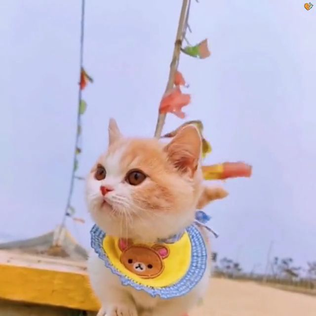 Cute cat with clothes
