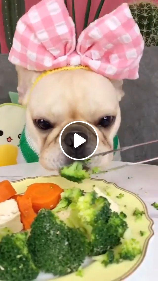 Dog eating broccoli, dog eating, dog broccoli, french bulldog, cute dog, cute puppy, funny, animal, dog eat