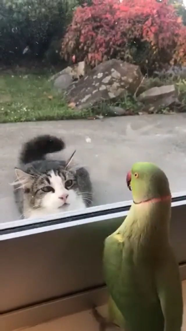 Parrot playing peekaboo with cat