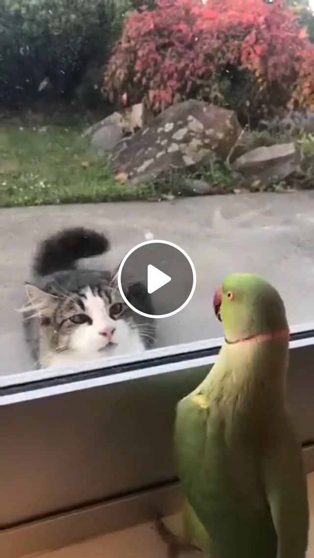 Parrot playing peekaboo with cat, green parrot, funny cat gif, playing peekaboo, looking cat, glass door, animal