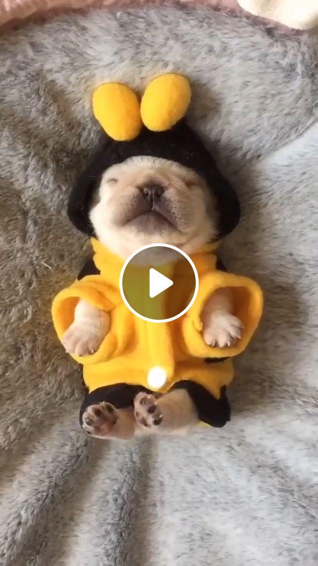 Cute baby puppy, cute puppy, sleeping dog, new puppy, getting a puppy, pet, animal