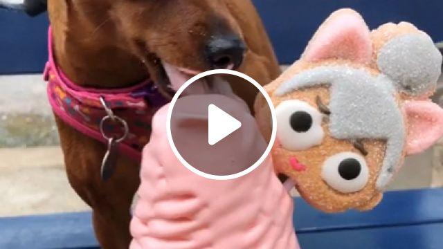 Dog eating ice cream, dog eating, dog ice cream, cute dog, cute puppy, funny dog, animal, dog eats