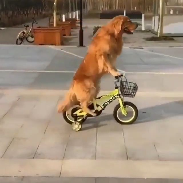 How to drive a bycycle