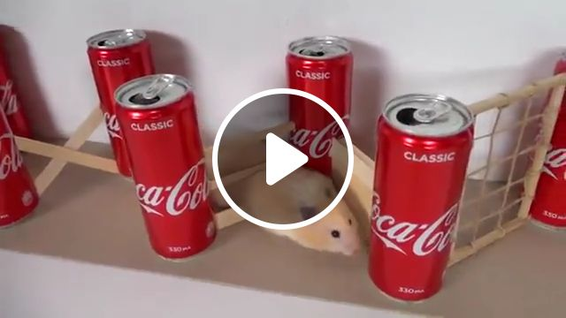 Hamster takes on Obstacle Course, military obstacle, coca cola, pet hamster, guinea pigs, maze, mine, craft, cute hamster, cage, super mario, animal memes, secret life, syrian hamster, dwarf hamster, funny hamster