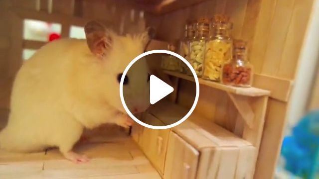 Cute Wooden Hamster House, wooden, diy hamster hideout, pet rat, nesting habitat, dwarf, hamster toys, hideout hut, syrian hamster, small animal, gerbil