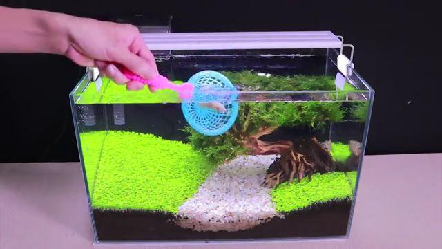 How To Grow Aquatic Plants in Aquarium