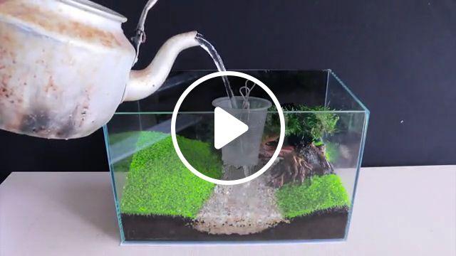 How To Grow Aquatic Plants in Aquarium, java fern, live plants, fish, planted tank, anubias nana, fish tank, lighting for a planted, freshwater aquariums