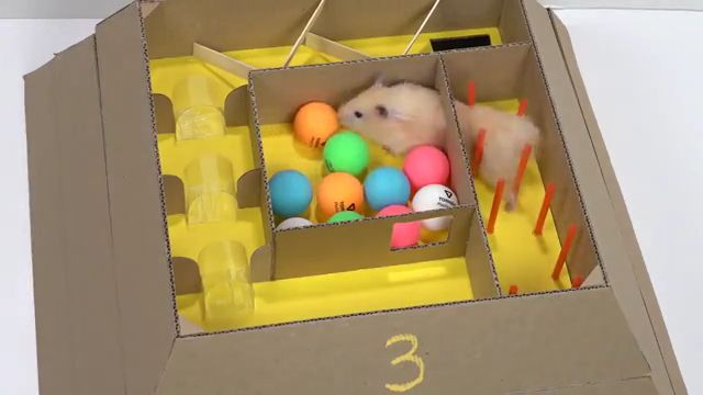 Funny Hamster in 6 Level Pyramid Maze resize