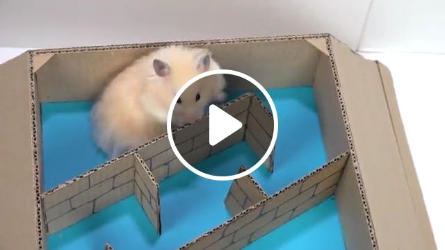Funny Hamster in 6 Level Pyramid Maze resize, hamster, cute hamsters, secret life, slick slime sam, lego, pool, diy, funny pet hamster, rainbow, homura ham, months ago, dwarf hamster, hamster cagesyrian