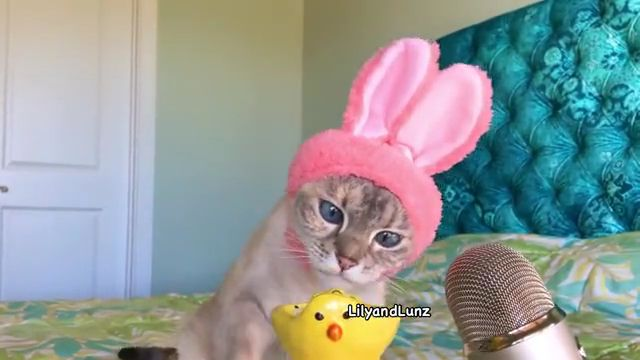 Can Cats Eat Egg