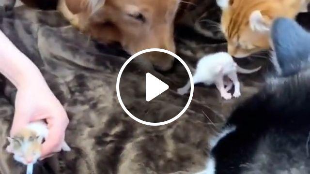 Cute baby cat Funny, compilation cat, kitten, cat memes, cute kitten, baby animal, laugh, crazy cats, cat spraying, pet
