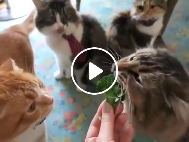 Cat eat broccoli, dinner wallpaper, eating veggie, original, sitting table, vegetal, seating fruit, real house, eats vegetable, white, front, veggie, smudge, goblin, mad, steamed