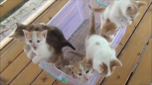 Cute kitten meowing