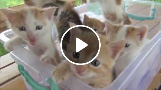 Cute kitten meowing, tiny, adorable, baby cute, adorable kitten, kitty, beautiful, cat, wonderful cute cat, cute, blue eyes, heart, orange kitten, kitten bowl, pitcher, pretty little, gray, ginger kitten