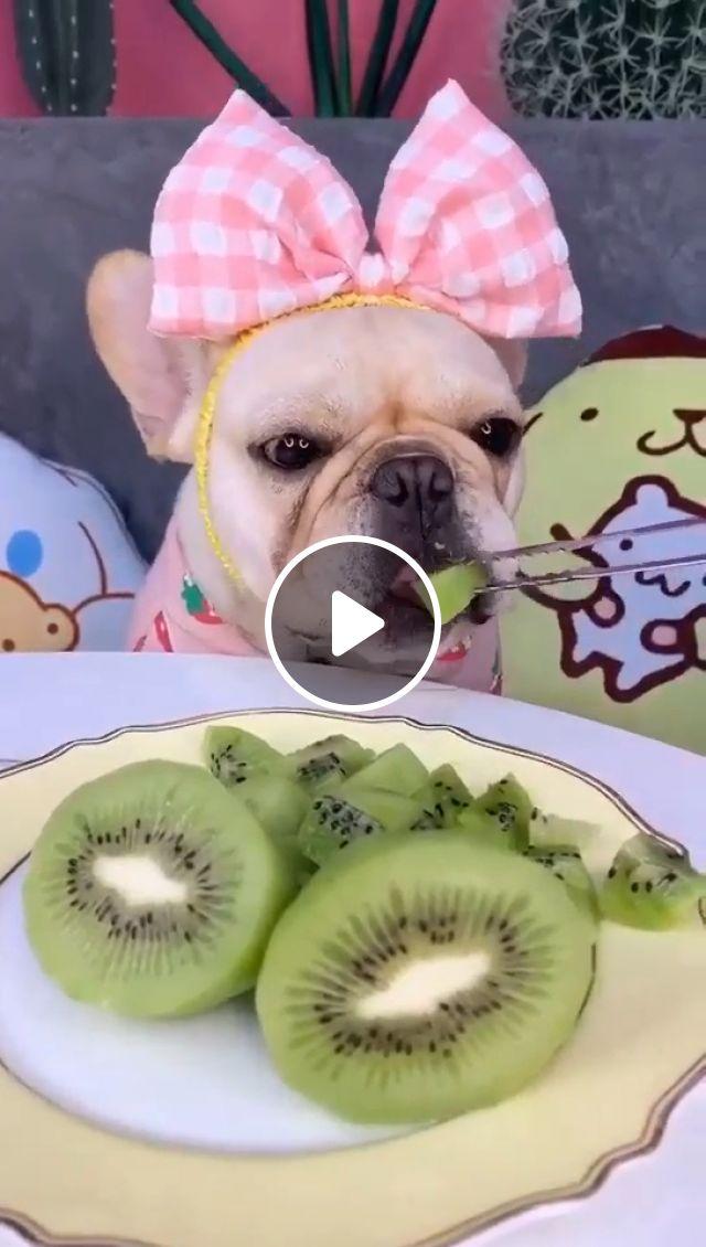 Cute puppy ever, dog eating, cute dog, dog eat wiki, cute puppy, dog eats, funny, animal, dog food