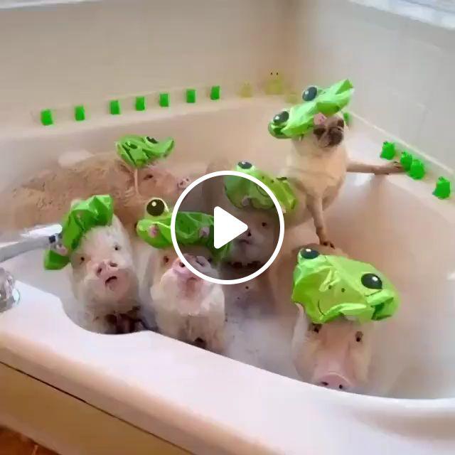 Bathing for dog, dog bath, dog shampoo, cleaning, stainless steel dog, wash, sink