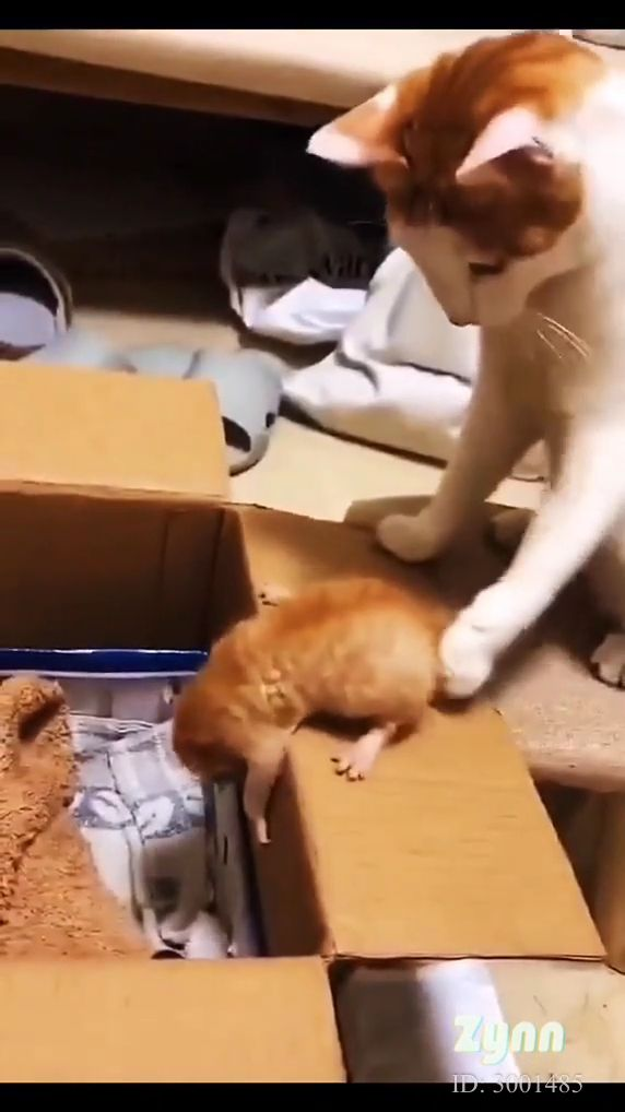 Mother cat takes care of kitten