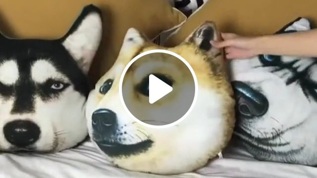 Cute Husky Pillow, husky pillow, soft pillows, dog pillow, stuffed animal, pillow for baby, decorative husky pillow, siberian husky dog, animal doll pillow, funny husky pillow cover, smiling husky dog pillow, i love husky, doll husky pillow, illustrated siberian husky pillow, blue eyed husky dog pillow, husky pillow pet