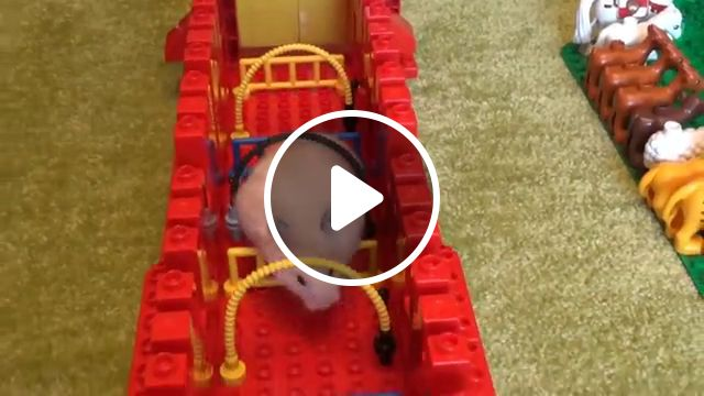 Hamster Lego Obstacle Course, lego duplo, lego land, transformers, funny pet hamster, stop motion, lego mazecute hamsters, syrian hamster, lego city, maze ingenchanted, dwarf hamster, lego mine, craft, guinea pig