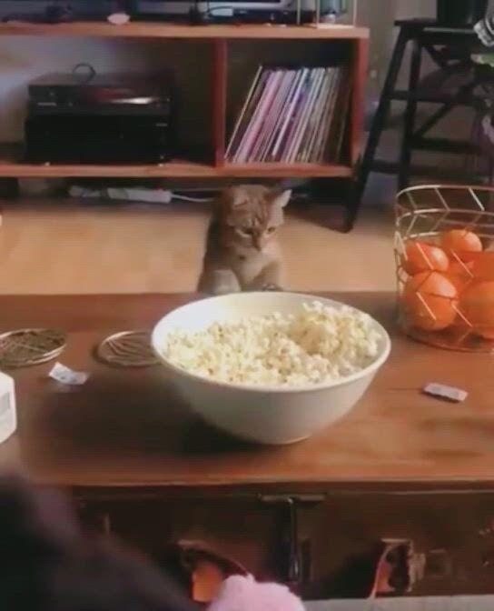 Decorlife Lovely Cat Brooch